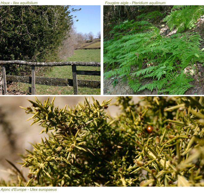segala-vegetation-lande