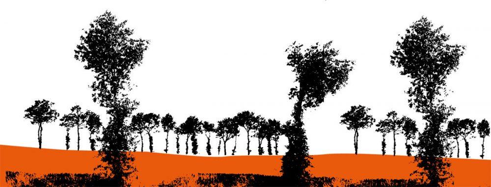 silhouette de chênes émondés