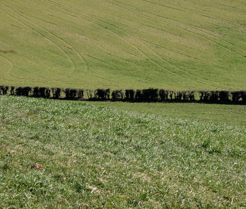 agriculture-segala-dynamique