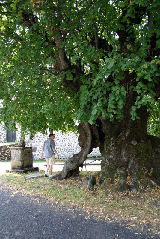Tilleul monumental de Nigresserre (commune de Thérondels)