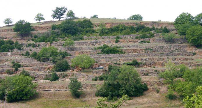 terrasse-vigne