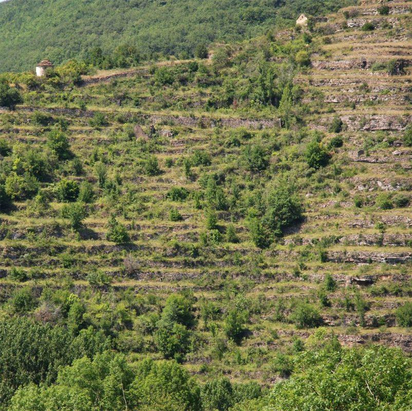 saint-rome-de-tarn-terrasses-vigne