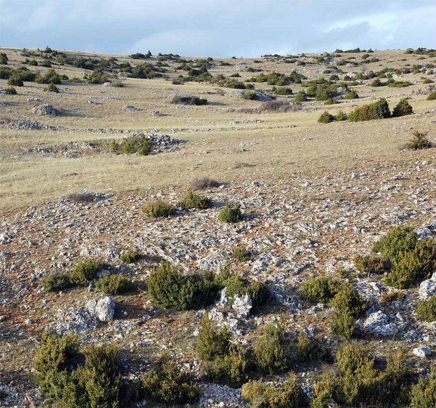 L'image naturelle forte de la steppe