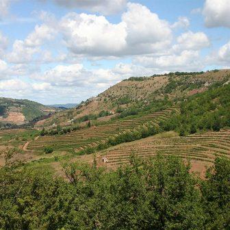 vigne-calcaire