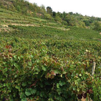 vigne-marcillac