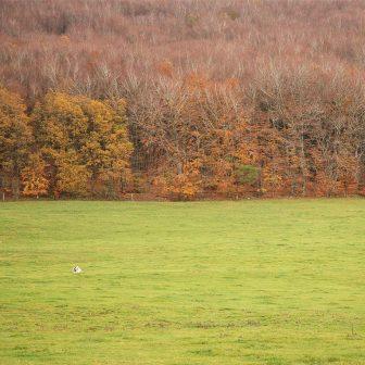 Les rameaux gris, rougis aux extrémités, distinguent la hêtraie hivernale.