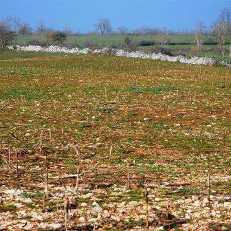 Les zones, où la profondeur du sol est suffisante pour la culture, ne peuvent absorber l'intensification agricole. Il est fréquent de voir des terrains caussenards mis en culture : le sol inculte est littéralement concassé afin de recevoir une culture incongrue (maïs) dans un tel lieu.
