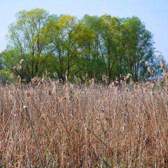 Les zones humides basiques abritent une flore caractéristique