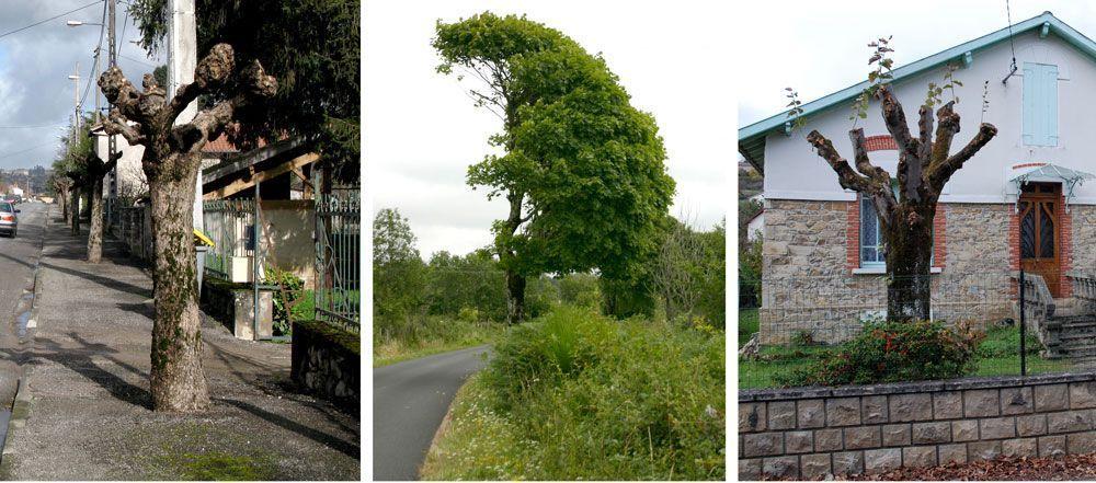 montage-arbre-img-une