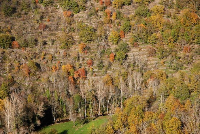paysage-terrasse-castelnau-pegayrols